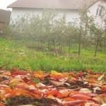 Jesienna Rafa