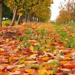 Złotobrązowzielona feria barw.Jesień.