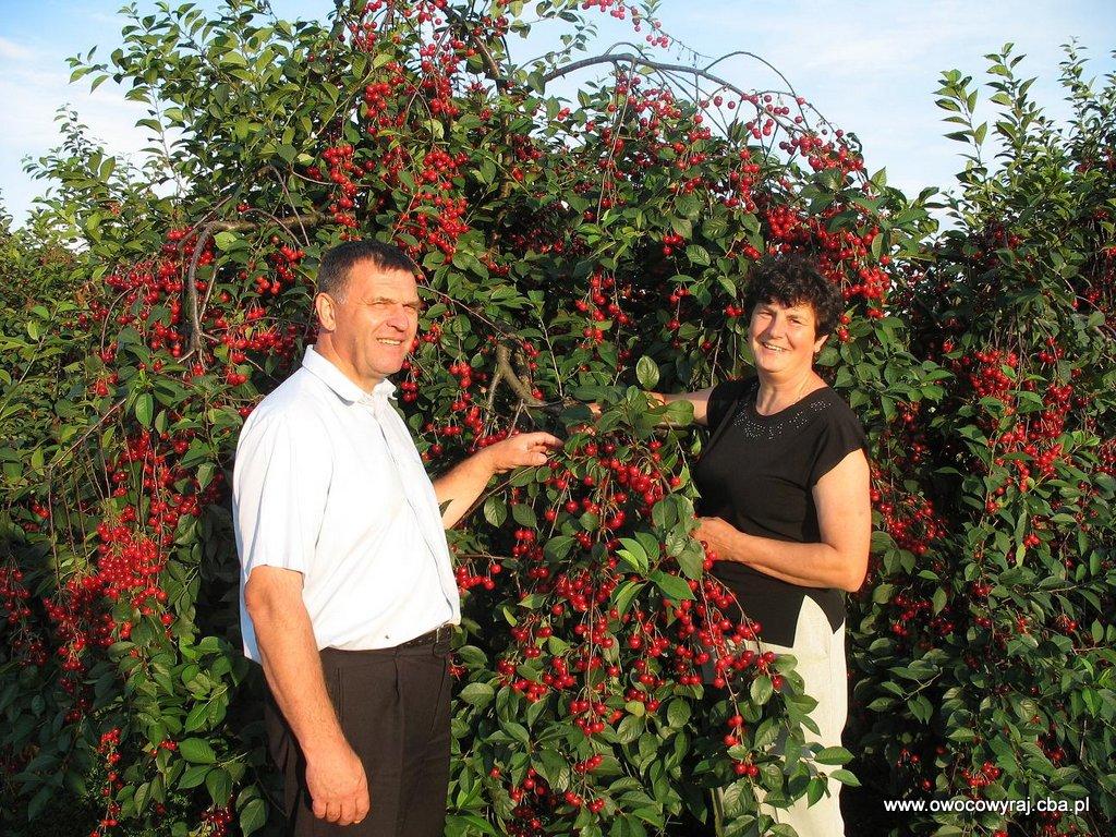Małgorzata i Andrzej w sadzie