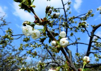 wiosna2019_4