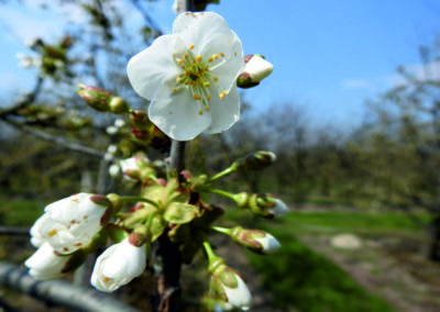 wiosna2019_5