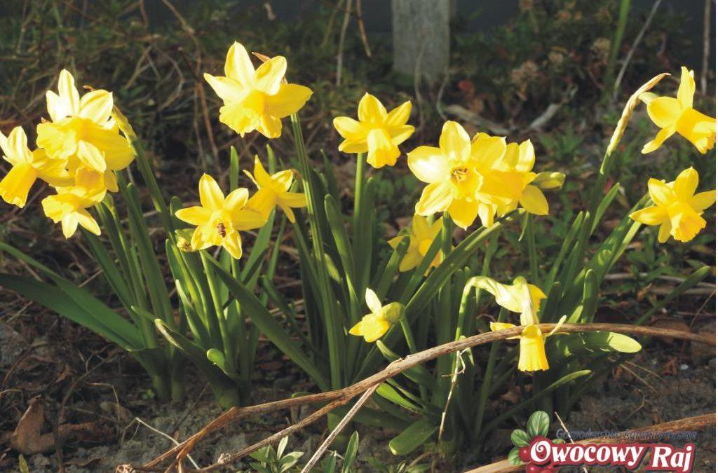 Wiosna w kwarantannie